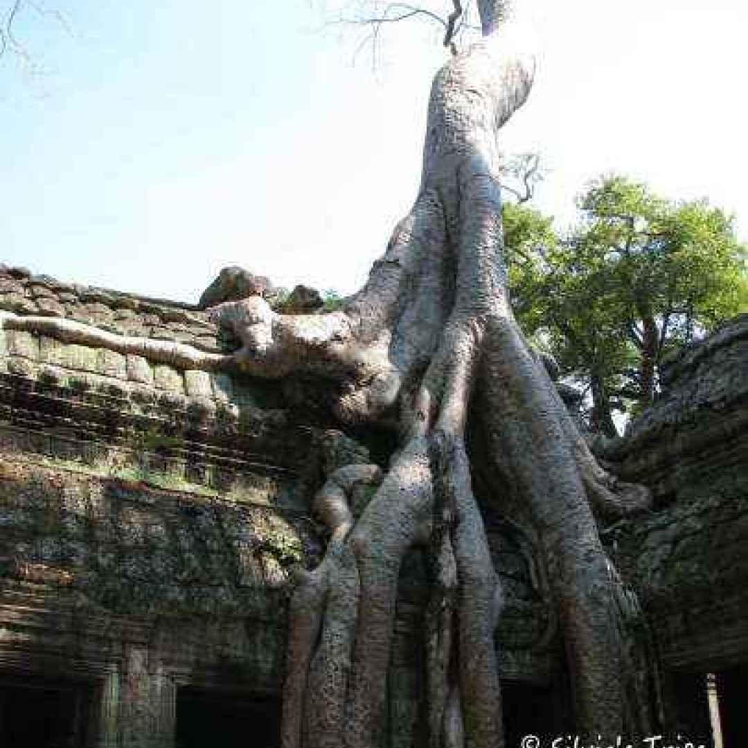 sudest asiatico  thailandia  viaggi