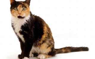 Animali: gatto  gatti  gatta  tre colori