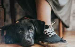 Mostre e Concorsi: cani  fotografia  concorso  animali