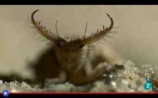 Animali: animali  insetti  deserto  namib
