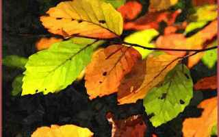 Cultura: pincopallo  autunno  estate  foglie