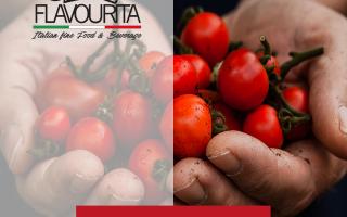Alimentazione: pomodoro  alimentazione sana  benessere
