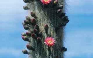 cactus  foto  mania