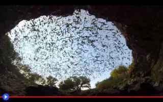 Animali: animali  pipistrelli  texas  caverne