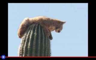 Animali: animali  natura  piante  felini  strano