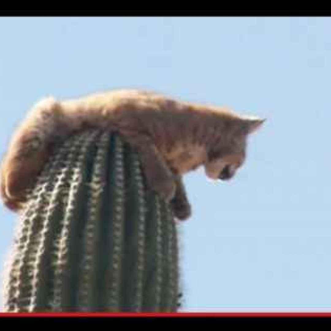 animali  natura  piante  felini  strano