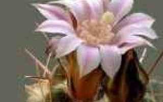 Foto: fedeltà  fiori di cactus  immagini
