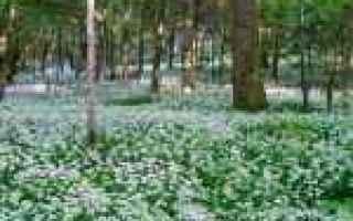 desktop  flora  immagini  1366x768