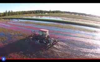 tecnologia  agricoltura  frutti  cibo