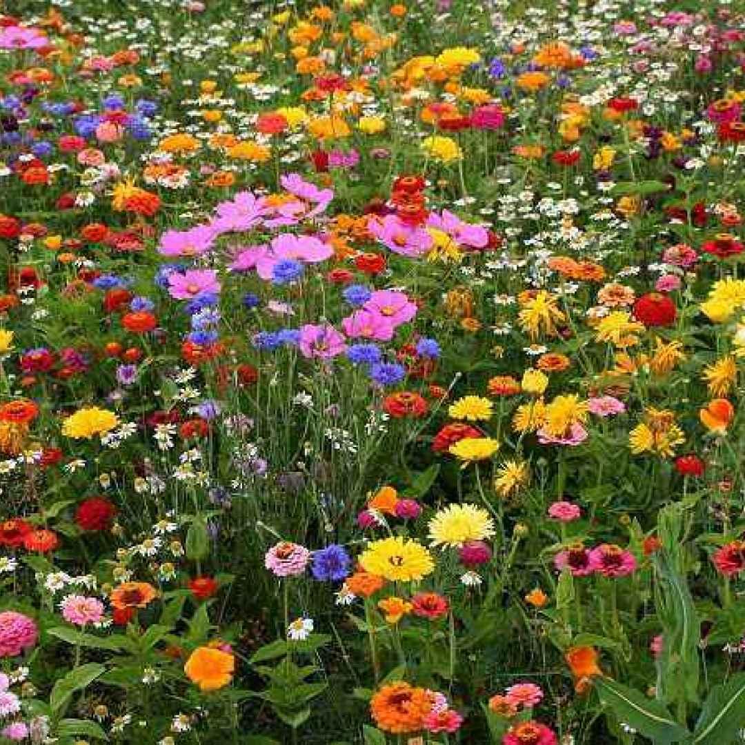 interpretazione sogni  sognare fiori