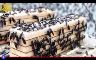 insetti  spazzatura  mosche  riciclo