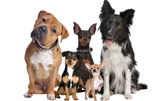 Animali: food  dog  health