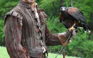 Animali: falconeria  cinema  televisione