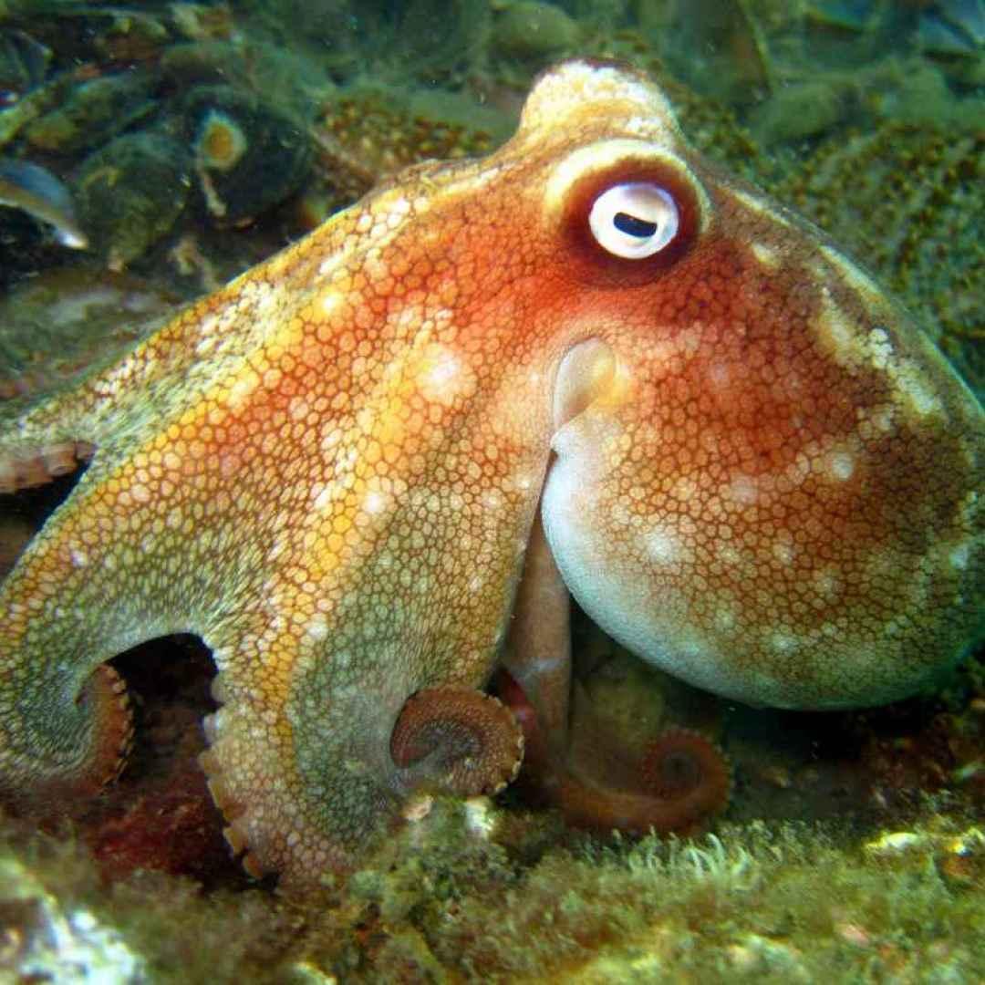 cute cuttle fish - HD1024×820
