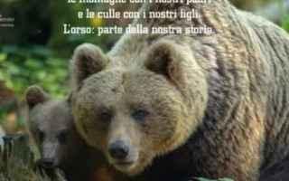 Animali: trentino  orsa  attualità  governo