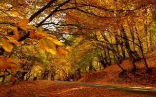 autunno  cucina  guardaroba