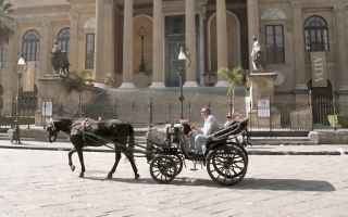 Animali: sicilia  messina  palermo  cavalli