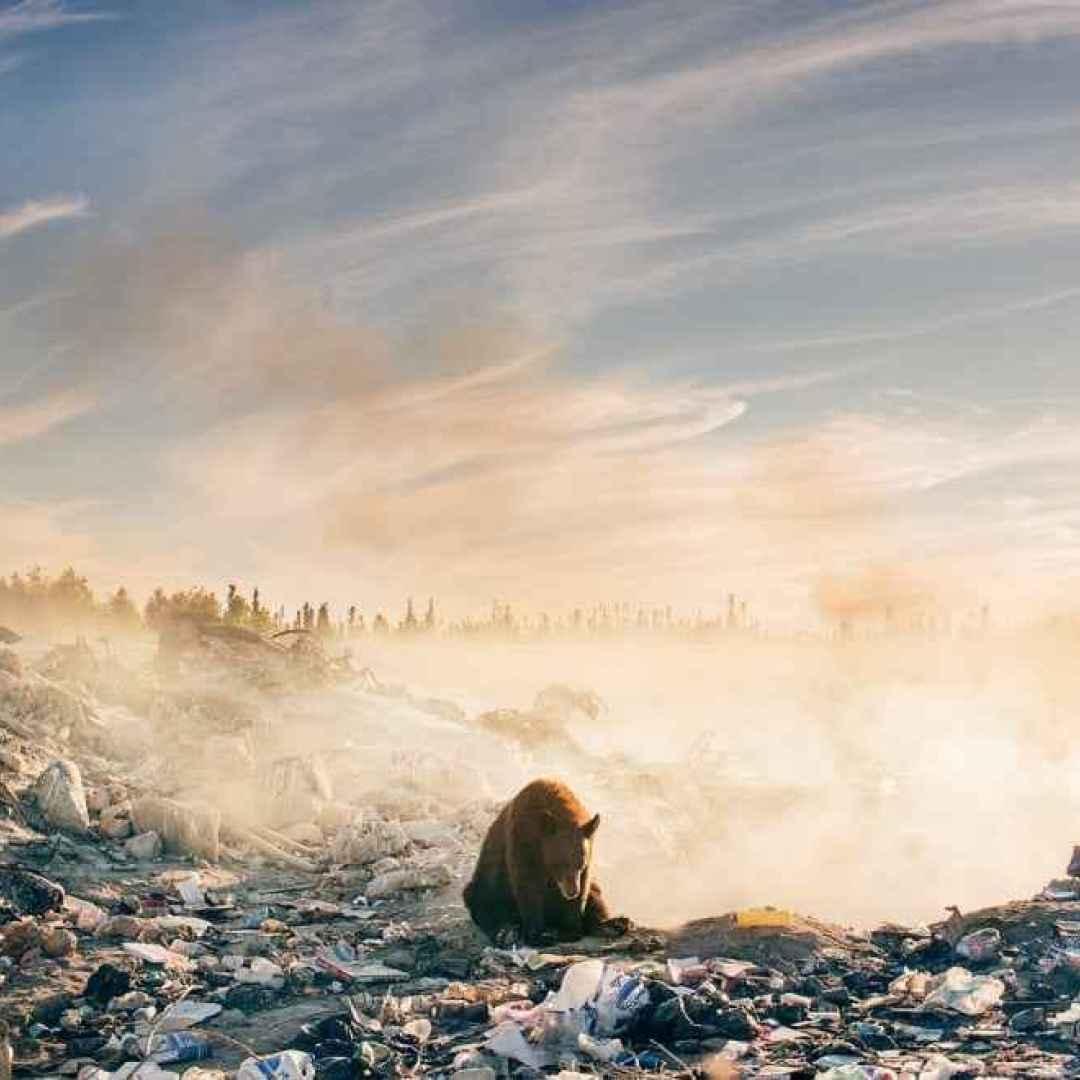 fotografia  natura  canada