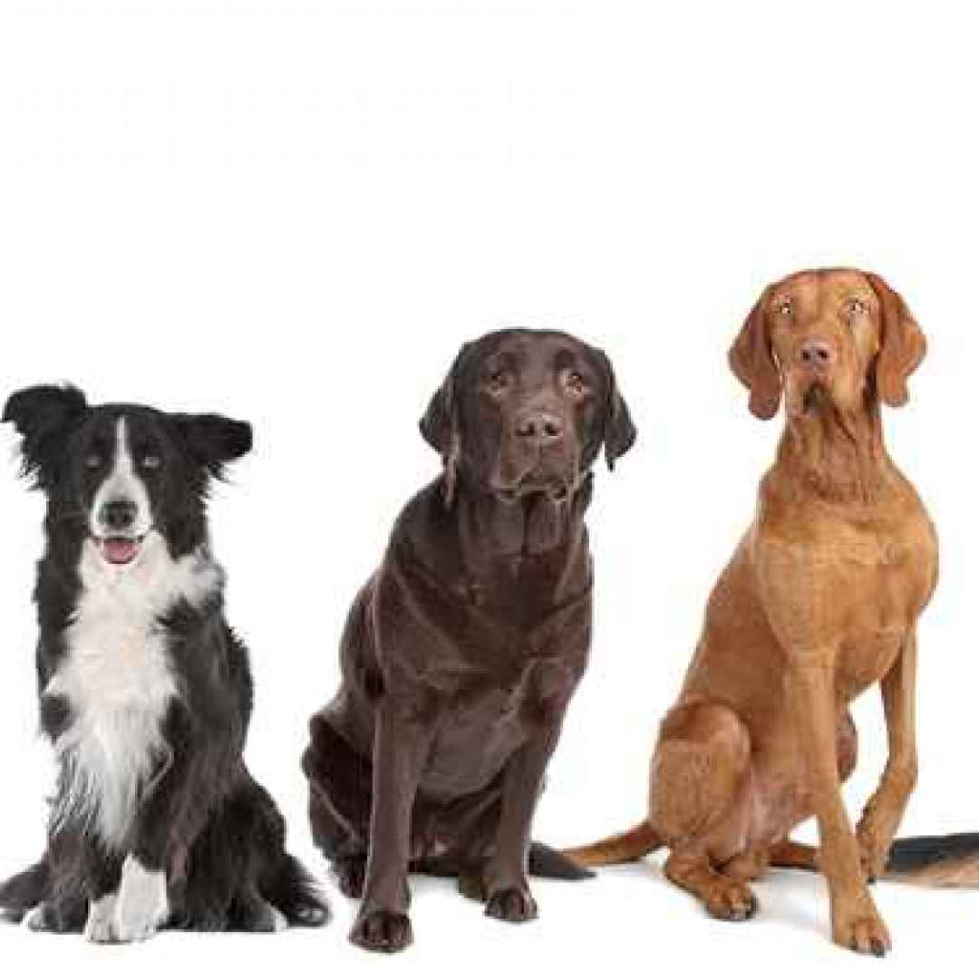 cani  cane  pets  dog  dogs  quiz