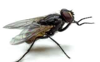 Scienze: mosca mosche insetto