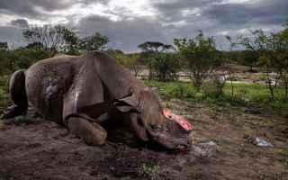 Mostre e Concorsi: wildlife natura fotografia concorso