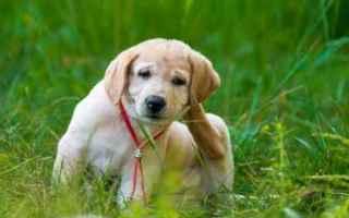 Animali: cane  allergia  prurito  veterinario