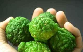 Alimentazione: bergamotto  proprietà  colesterolo