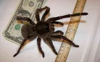 Animali: insetti  ragni  veleno  scienza