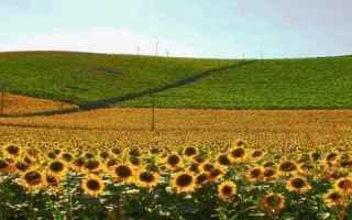 Viaggi: monferrato  colline  racconto  fotografia  scrittura