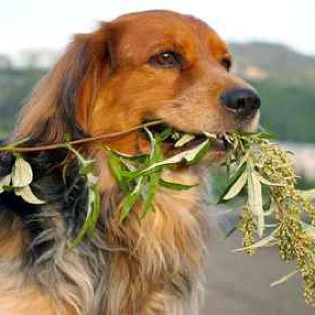 cane  veterinario  insufficienza renale