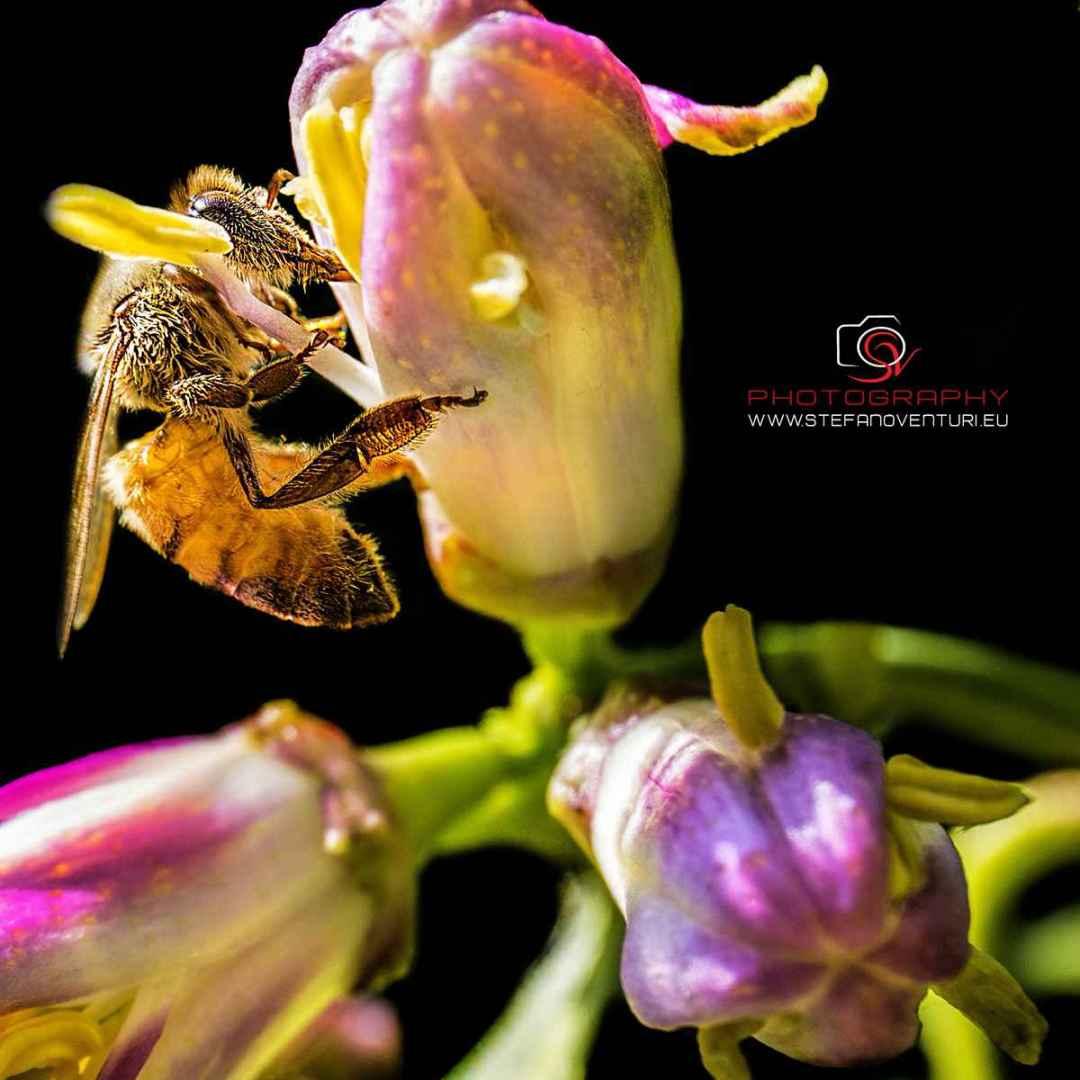ispirazioni  fotografia  macro  insetti