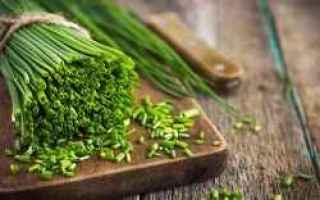 Alimentazione: erba cipollina  proprietà  benefici