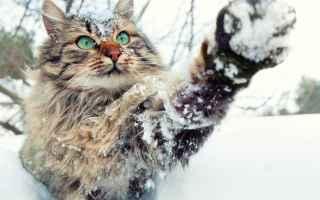 vai all'articolo completo su gatti