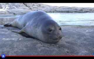 Animali: animali  cuccioli  foche  pinnipedi
