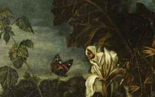 Arte: arte  pittura antica  matthias withoos