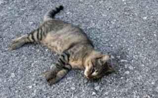 Animali: gatto  avvelenamento
