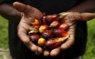 Alimentazione: alimentazione  olio di palma  food