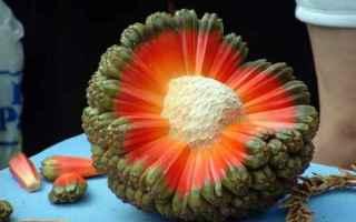 Scienze: ambiente  alberi piante  frutta  cibo  hawaii
