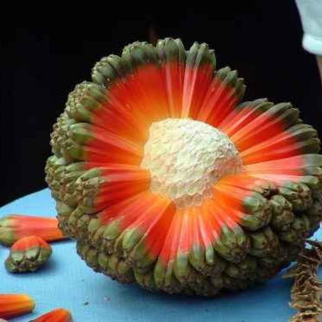 ambiente  alberi piante  frutta  cibo  hawaii