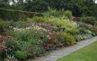 giardino  erbacee  progetto