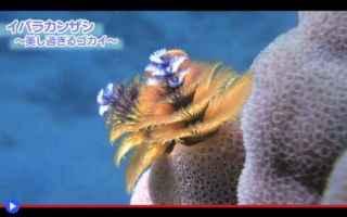 Animali: animali  anellidi  policheti  mare