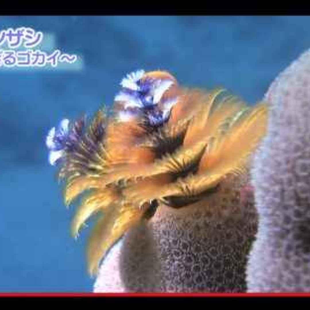 animali  anellidi  policheti  mare