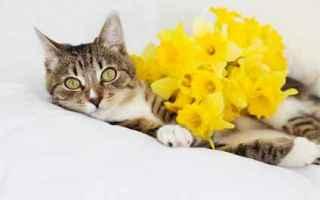 Animali: gatto  alimenti gatti  sovrappeso