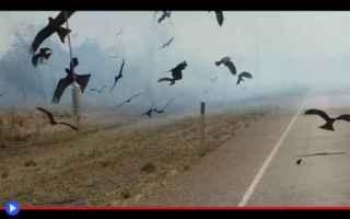 Animali: animali  uccelli  rapaci  falchi
