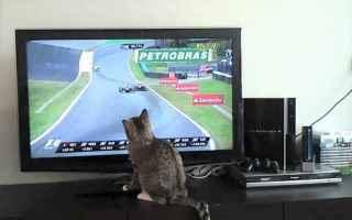 Formula 1: formula 1  raisport  ferrari