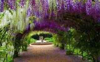 Giardinaggio: pergola  pergolato  legno  fiori