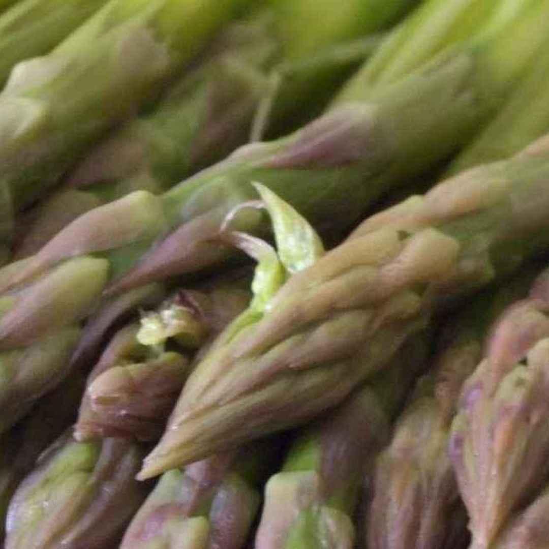 cancro tumore asparagi asparagina studio