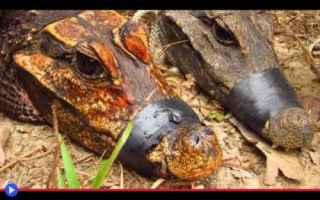 Animali: animali  natura  ambiente  africa