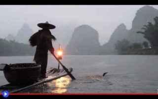 Animali: animali  pesca  tradizioni  cina