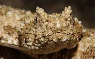Animali: animali  predatori  serpenti  rettili